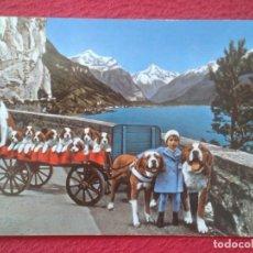 Postales: POST CARD SUIZA SCHWEIZ SUISSE SWITZERLAND AM VIERWALDSTÄTTERSEE PERROS NIÑO DOGS CHILD CHIENS CARRO. Lote 206900602