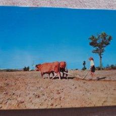 Postales: TRAS OS MONTES PORTUGAL TURISTICO COLECCION REF 1479 SUPERCOR BUEYES ARADO. Lote 221715061