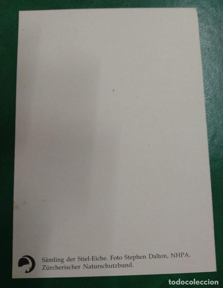 Postales: TARJETA SIN CIRCULAR SUIZA . SAMLING DERVSTIEL- RICHE. ZURCHERISCHER NATURSCHUZBUND. - Foto 2 - 268477249