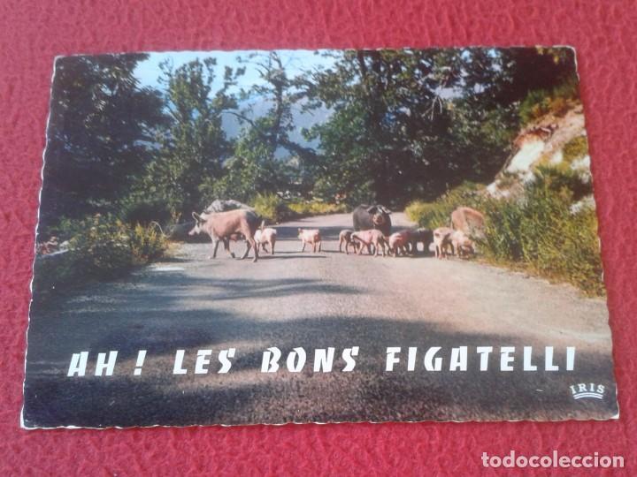 POSTAL CARTE POSTALE FRANCIA FRANCE CORSE CÓRCEGA CERDOS COCHINOS PIGS PORKS PORCS BONS FIGATELLI... (Postales - Postales Extranjero - Europa)
