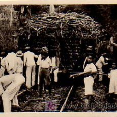 Postales: GUADALUPE. CANNE À SUCRE EN WAGON. WAGGON LOADS OF SUGAR CANE. . Lote 4629209