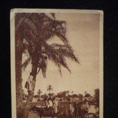 Postales: RECOGIDA DE DATILES. SIN CLASIFICAR. APRO.1900 SIN CIRCULAR. Lote 11499476