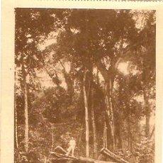 Postales: POSTAL GUINEA ESPAÑOLA EL BOSQUE . Lote 9981715