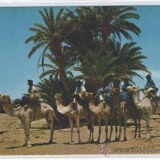 Postales: TARJETA POSTAL DE SAHARA TIPICO CARAVANA DE MEHARISTAS CON CINCO CAMELLOS AFRICA ESPAÑOLA. Lote 15571570