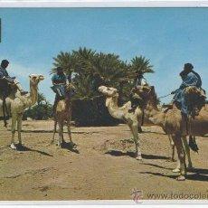 Postales: TARJETA POSTAL DE SAHARA TIPICO CARAVANA DE MEHARISTAS CON CUATRO CAMELLOS AFRICA ESPAÑOLA. Lote 15571587