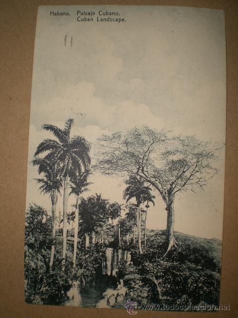 HABANA..- PAISAJE CUBANO. (Postales - Postales Temáticas - Ex Colonias y Protectorado Español)