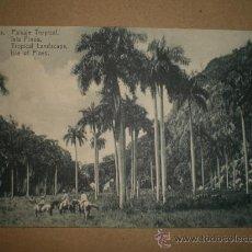 Postales: HABANA..- PAISAJE TROPICAL, ISLA PINOS.. Lote 27178701