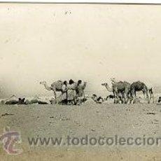 Postales: AAIUN (SAHARA ESPAÑOL).- MERCADO DE CAMELLOS.- EDICIONES GUERRERO Nº 449.- FOTOGRÁFICA. Lote 29512689