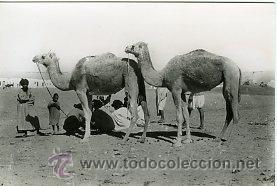 AAIUN (SAHARA ESPAÑOL).- EN LAS AFUERAS.- EDICIONES GUERRERO Nº 475.- FOTOGRÁFICA (Postales - Postales Temáticas - Ex Colonias y Protectorado Español)