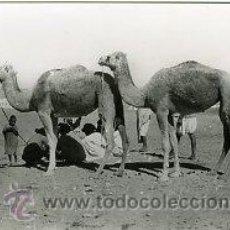 Postales: AAIUN (SAHARA ESPAÑOL).- EN LAS AFUERAS.- EDICIONES GUERRERO Nº 475.- FOTOGRÁFICA. Lote 30444191