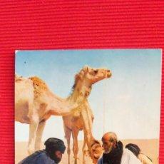 Postales: SAHARA - VENTA DE CAMELLOS. Lote 28855688