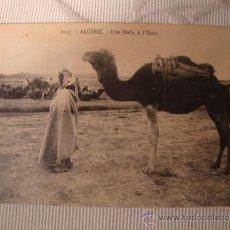 Postales: EXCELENTE TARJETA POSTAL ORIGINAL P.P.S.XX ALGERIA, ARABE CON CAMELLO, HACIA EL AÑO 1909. Lote 33091432