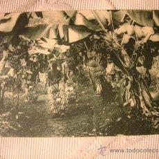 Postales: TARJETA POSTAL ORIGINAL GUINEA ESPAÑOLA. A-26 PABELLÓN COLONIAL EXPOSICION IBERO AMERICA 1929. Lote 33751322
