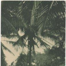 Postales: GUINEA ESPAÑOLA CONTINENTAL.-MERCADO PÁMUE EN BATA (1929).-EDICIÓN PUBLICACIONES PATRIÓTICAS, MADRID. Lote 34866459