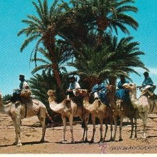 Postales: SAHARA. CARAVANA DE MEHARISTAS. Lote 37181435