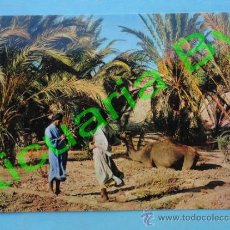Postales: SÁHARA ESPAÑOL. OAIS MESEIED. PHILIPPE MARTIN. IRIS. Lote 38651651