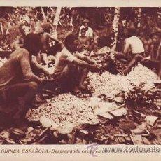 Postales: GUINEA ESPAÑOLA. DESGRANANDO CACAO EN UNA FINCA DE FERNANDO POO.. Lote 38754104