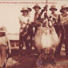 Postales: GUINEA. PESCA DE UNA TORTUGA A BORDO DE UN BARCO EN PUNTA CALATRAVA.. Lote 38754370