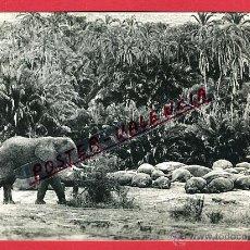Postales: POSTAL GUINEA ESPAÑOLA, ELEFANTES E HIPOPOTAMOS, P97215. Lote 46738446