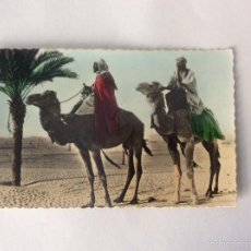 Postales: POSTAL FOTOGRÁFICA COLOREADA. ESCENAS DEL SAHARA. CAMELLOS. SAHARA ESPAÑOL.. Lote 58253103