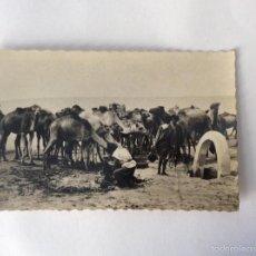 Postales: POSTAL FOTOGRÁFICA. REBAÑO DE CAMELLOS ABREVANDO EN UN POZO. SAHARA ESPAÑOL.. Lote 58253194