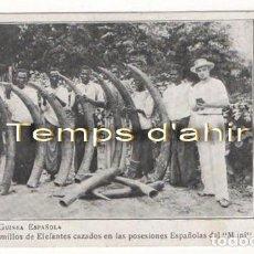 Postales: (ALB-TC-4) INTERESANTE POSTAL GUINEA ESPAÑOLA COLMILLOS DE ELEFANTE NUEVA. Lote 67834209
