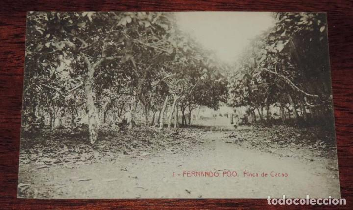 FERNANDO POO (GUINEA ECUATORIAL) FINCA DE CACAO, THOMAS SIN CIRCULAR (Postales - Postales Temáticas - Ex Colonias y Protectorado Español)
