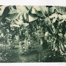 Postales: GUINEA CONTINENTAL- EXPOSICION IBERO-AMERICANA, SEVILLA-1929- EXPLOTACIÓN DE PLATANOS.. Lote 112986387