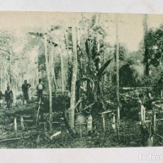 Postales: GUINEA CONTINENTAL- EXPOSICION IBERO-AMERICANA, SEVILLA-1929- UN GRAN DESBOSQUE. Lote 112988403
