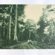 Postales: GUINEA CONTINENTAL- EXPOSICION IBERO-AMERICANA, SEVILLA-1929- CARRETERA DE BATA.. Lote 113243159