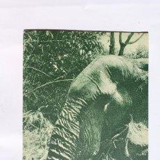 Postales: GUINEA CONTINENTAL- EXPOSICION IBERO-AMERICANA, SEVILLA-1929- . Lote 113249395