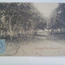 Postales: POSTAL DE FERNANDO POO ( GUINEA ESPAÑOLA ): FINCA DE CACAO . CIRCULADA CON SELLO DE ALFONSO XIII. Lote 135063434