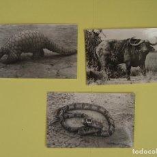 Postales: LOTE DE 3 TARJETAS POSTALES (1960'S) GUINEA (BATA) (ANIMALES) ¡SIN CIRCULAR! ¡ORIGINALES!. Lote 137418882