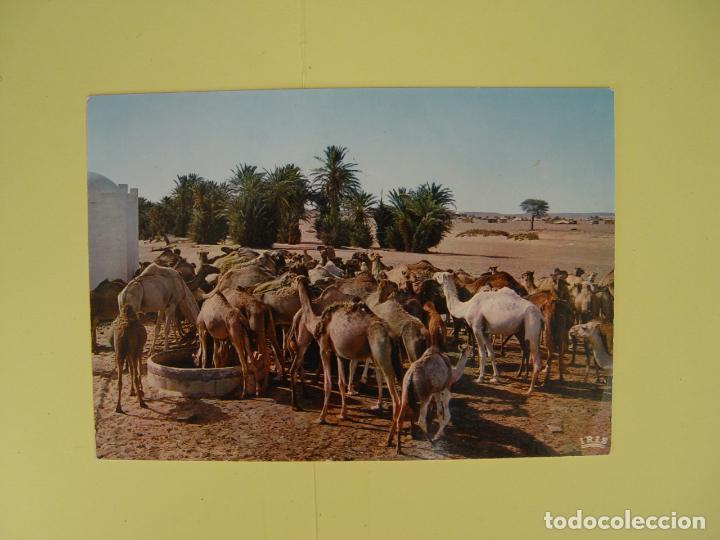Postales: Lote de 4 tarjetas postales (1960's) SAHARA ESPAÑOL ¡Sin circular! ¡Originales! - Foto 3 - 137420754