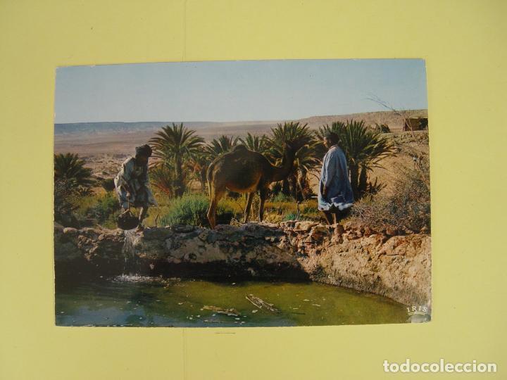 Postales: Lote de 4 tarjetas postales (1960's) SAHARA ESPAÑOL ¡Sin circular! ¡Originales! - Foto 6 - 137420754