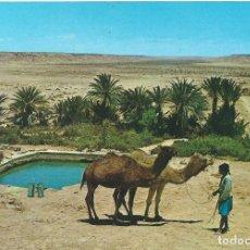 Postales: SAHARA. OASIS DEL MESEIED. DISTRIBUIDORA RABADAN. Lote 139545726