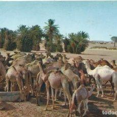 Postales: SAHARA ESPAÑOL. SMARA. LLEGADA AL POZO. ED. FOT. PHILIPPE MARTIN. Lote 139559042