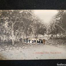 Postales: POSTAL SANTA ISABEL DE FERNANDO POO - GUINEA ESPAÑOL- FINCA DE CACAO. Lote 211958015