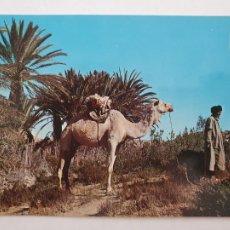 Cartes Postales: SAHARA ESPAÑOL - OASIS DEL MESSEIED - LMX - SHE. Lote 214711152