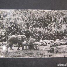 Postales: GUINEA ESPAÑOLA-ELEFANTES E HIPOPOTAMOS-FOTO CALIFORNIA BATA-5-POSTAL ANTIGUA-(77.594). Lote 242353875