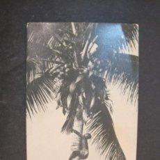 Postales: SANTA ISABEL-FERNANDO POO-COCOTERO-EDICIONES FOTO AUGUSTO-POSTAL ANTIGUA-(77.600). Lote 242356000