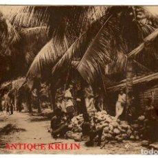 Postales: GUINEA CONTINENTAL Nº A-19 UNA FINCA DE COCOS. Lote 253796765