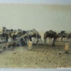 Postales: SAHARA RARA POSTAL DE LA COLONIA DE ESPAÑA EN AFRICA - CAMELLOS ABREVANDO AÑOS 1950. Lote 254466050