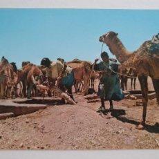 Cartes Postales: SAHARA ESPAÑOL -BEDUINOS - CAMELLOS ABREVANDO - LAXC - P58087. Lote 278413123