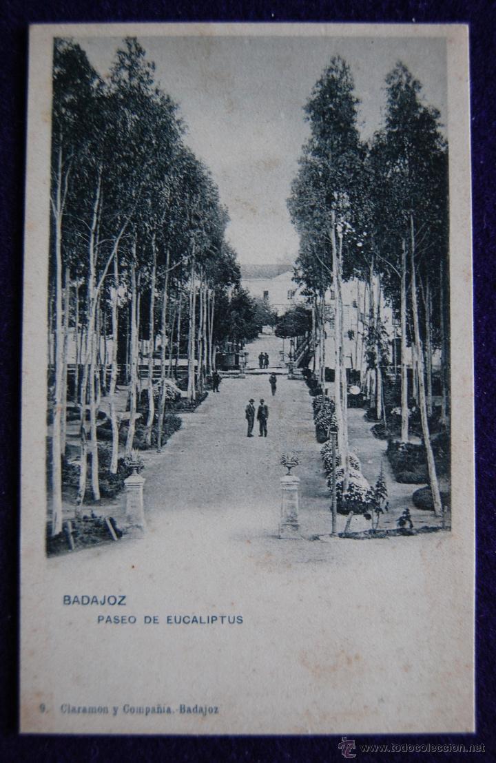 POSTAL DE BADAJOZ. Nº9 PASEO DE EUCALIPTUS. AÑO 1903 (Postales - España - Extremadura Antigua (hasta 1939))