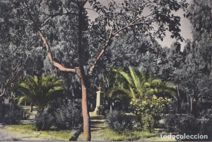 NAVALMORAL DE LA MATA (CÁCERES) PARQUE MUNICIPAL (D. CASTO LOZANO) (Postales - España - Extremadura Moderna (desde 1940))