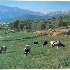 Postais: JARANDILLA (CÁCERES). 9418 PASTOS Y SIERRA DE GREDOS.FITER. USADA CON SELLO. COLOR. Lote 176917924