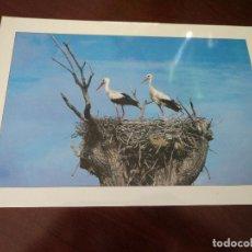 Postais: CIGUEÑAS EXTREMADURA FOTO MODESTO GALAN . Lote 190220346
