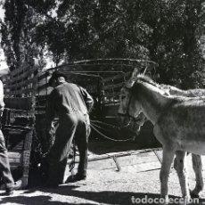 Postales: NEGATIVO ESPAÑA CÁCERES PLASENCIA FERIA GANADO 1970 KODAK 55MM GRAN FORMATO NEGATIVE SPAIN PHOTO. Lote 199804161