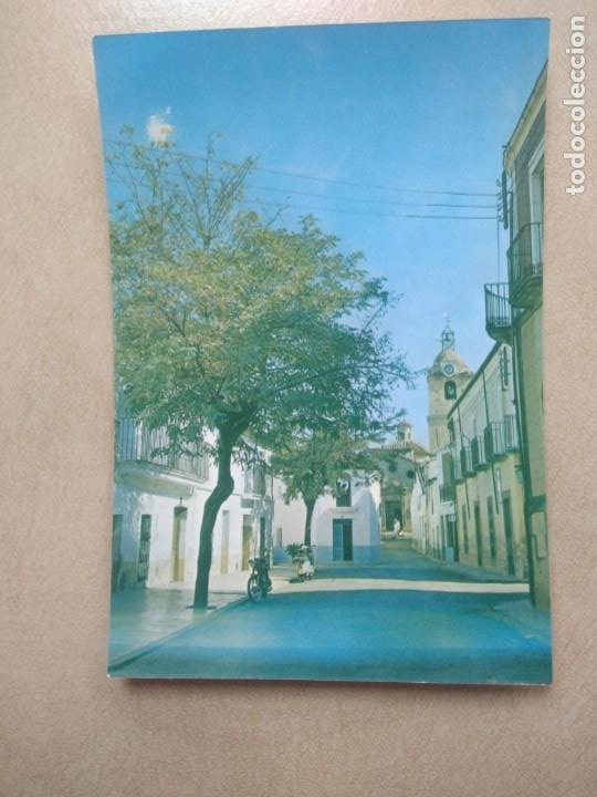 POSTAL MADROÑERA, CACERES, AVDA DE JOSE ANTONIO (Postales - España - Extremadura Moderna (desde 1940))